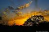 Norich Park Sunset April 12 07, Kite Flying.
