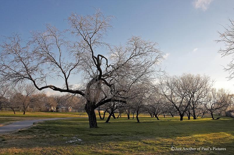 January Ice in Sunny Texas