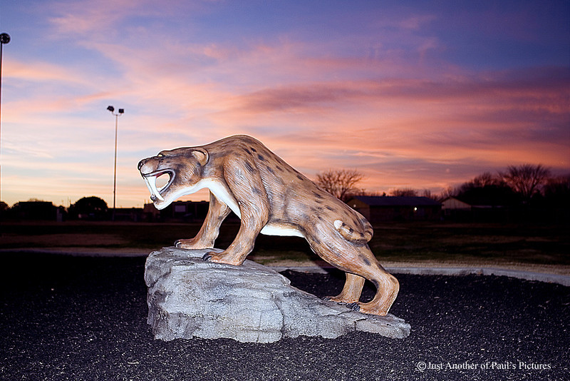 Saber Tooth at Dusk