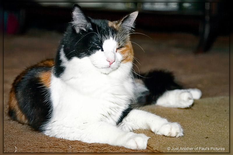 Serena Nov 24 2006