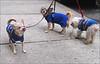 Joyce's Doggies