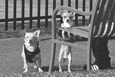 "Caption as you see fit.  ""Yo quiero taco bell "" is too lame.  These guys were fierce... this is cropped quite a bit - I got off one shot with the 18-55 and they started giving me what-for loudly at the shutter click.. owner was friendly but doggies must have smelled my cat."