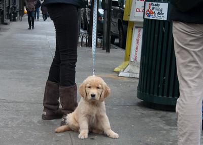 readywillingdoggie