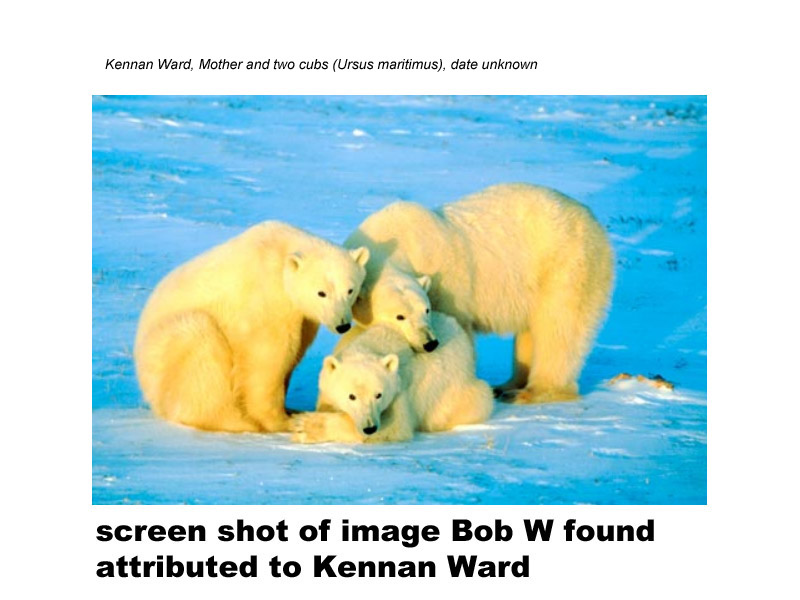 PolarbearsKennanWardreverse