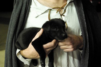 Morgan the foundling puppy