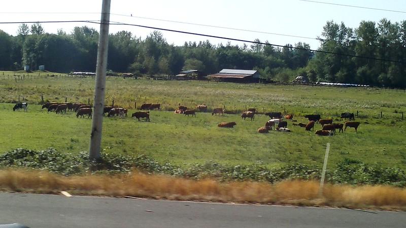 Mooo Cow!