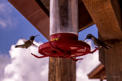 Hummingbirds, Cloudcroft, New Mexico