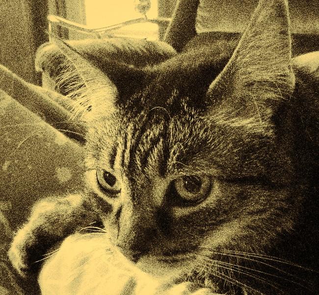 Morning Feline
