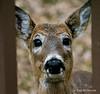 04-16-2014-deer_(1_of_2)