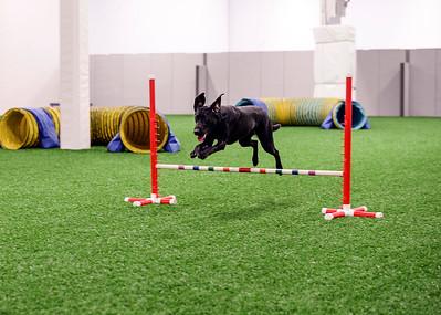 Foxglen Dog Sports