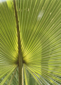 palm-frond---natures-artwork---1867_50868061433_o