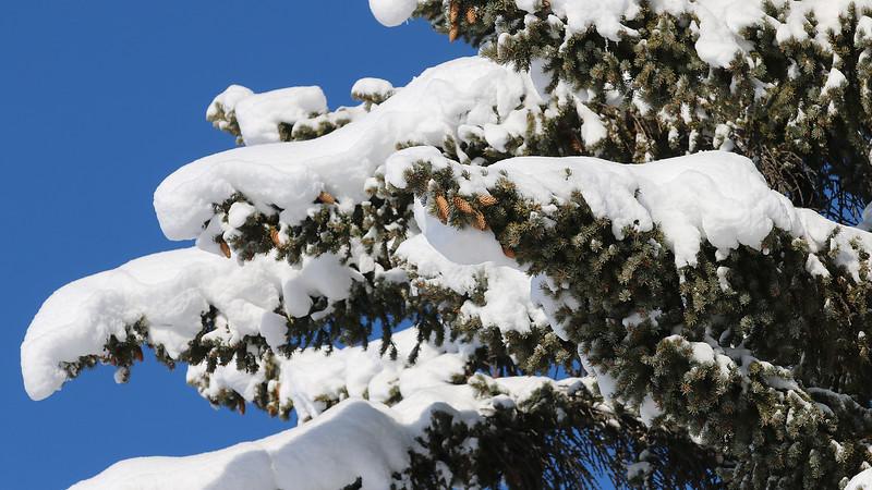 montana-big-sky-winter---0273_26549438929_o