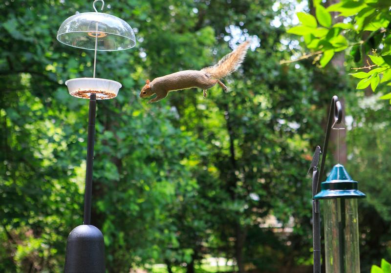 Squirrel-proof Bird Feeder, not.