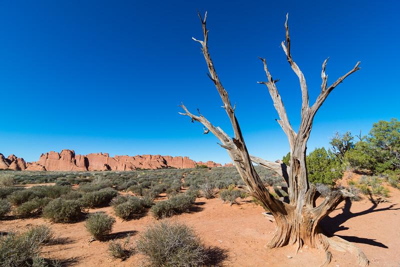 Sand Dune Arch-4248