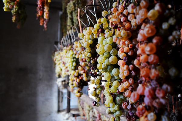 Hung Grapes