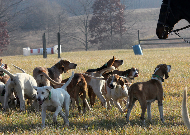 Metamora Fox Hunt-038