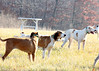 Metamora Fox Hunt-030
