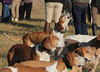 Metamora Fox Hunt-045
