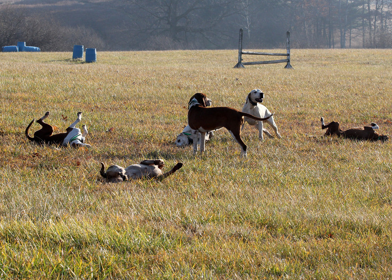 Metamora Fox Hunt-015