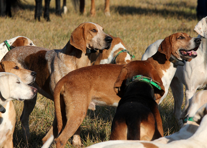 Metamora Fox Hunt-050