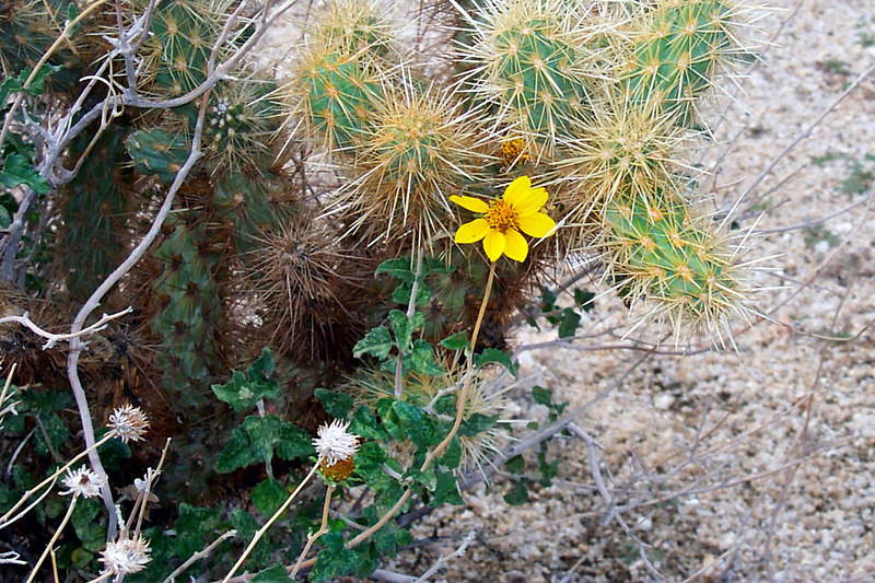We saw one flower on the hike, with the rains there should be a lot more later.