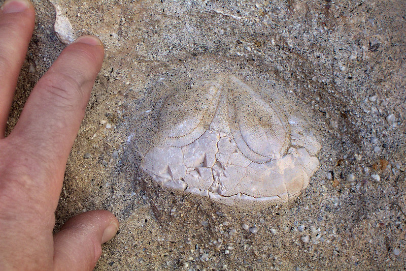 This sand dollar was inbedded in the falls.