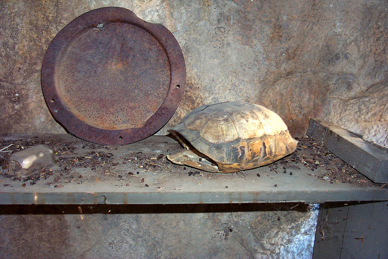 Tortoise shell.