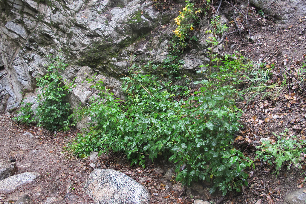 There was some poison oak in places, but it's easily avoidable.