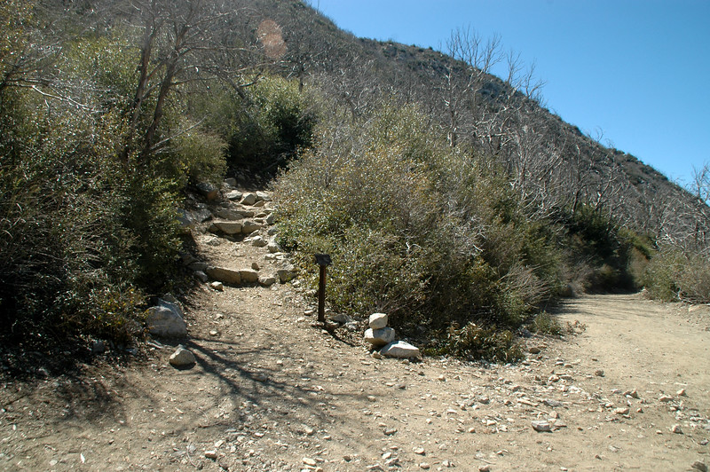 To the left is the Mount Lowe East Trail which is the one to the peak.