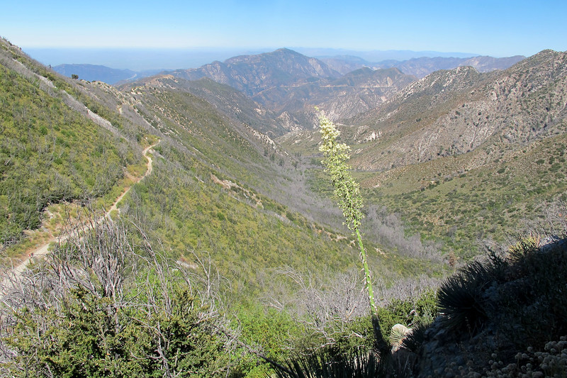 Looking down Little Bear Canyon with Mount Lukens 5,074' in the distance.