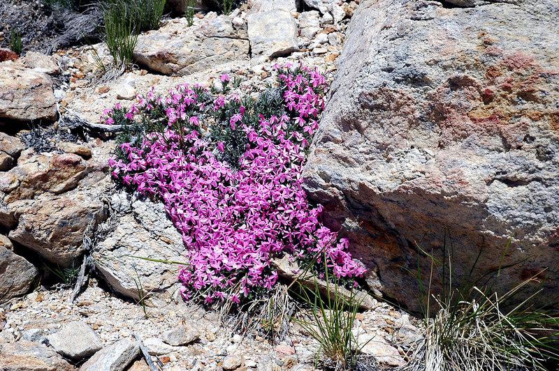 Flowers near the summit.