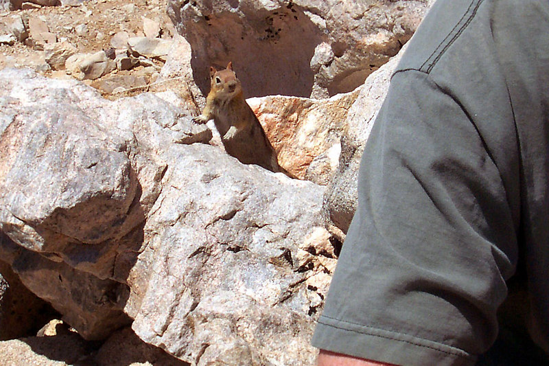 One of the summit locals looking for a hand out.
