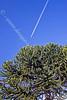 Tree Flight