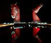 Kelpies at night in The Helix Park - 15 November 2014