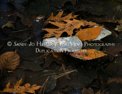 Layered Autumn Leaves