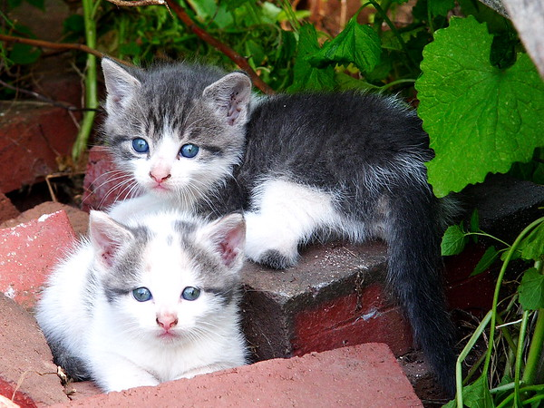 "Please sign our guestbook!  Click the ""add comment"" button below to save the kittens!!  ;p"