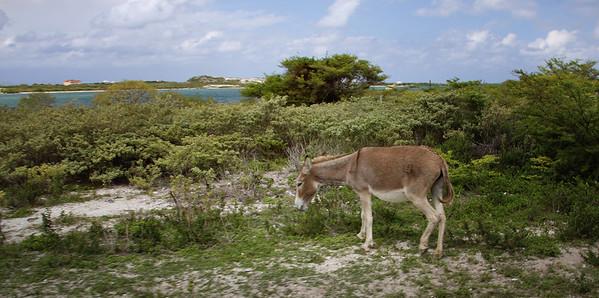 Eastern Carribean Cruise 10-2012 (362)-1