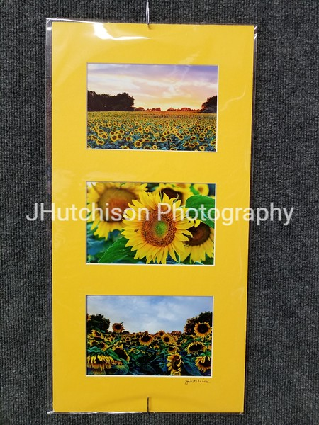 SUN0000 - Sunflower Collection