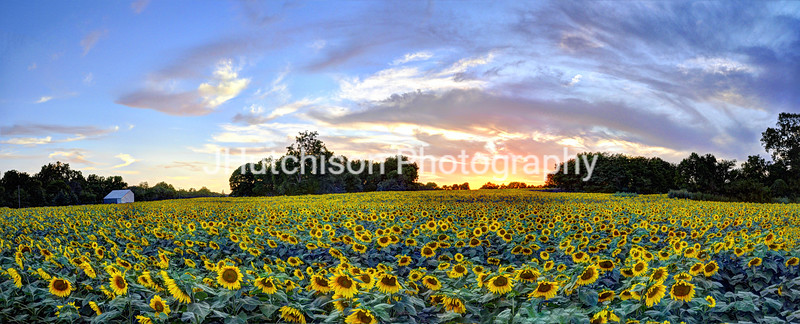 Grinter's Farm Sunset Panorama
