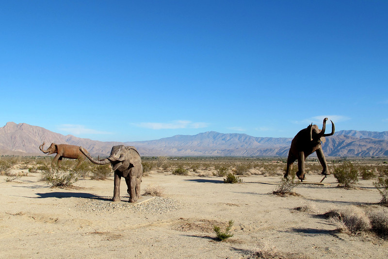 Group of Columbian Mammoths. The one up front is a baby with the two in the back being full size.