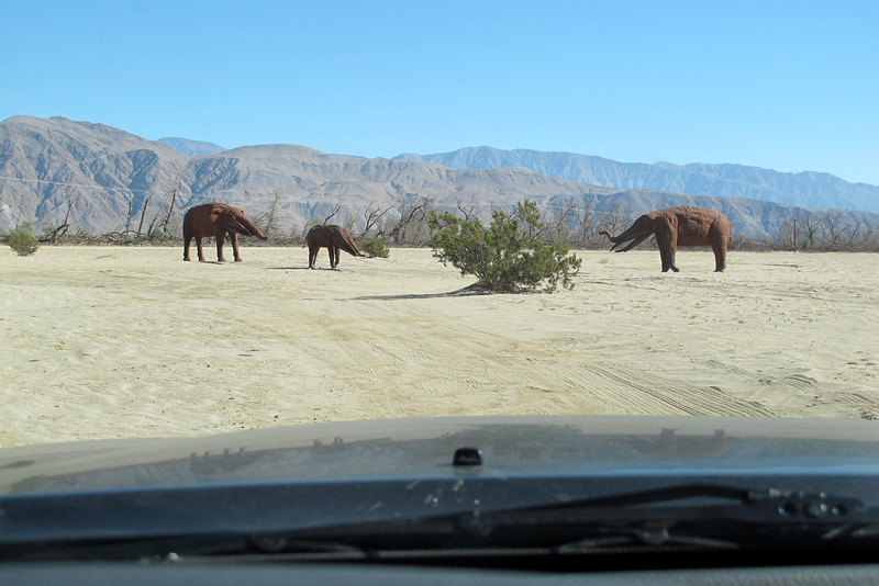 Approaching a group of Gomphotheriums.