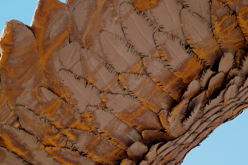 Detail of the feathers on the wing. The color on these sculptures is from the rusting metal.