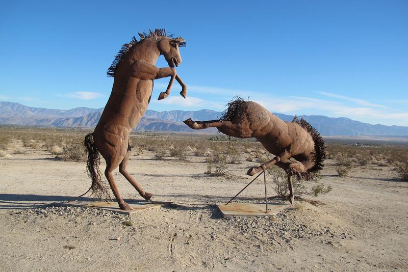 Fighting horses.