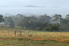 08/09/2016 - Misty Morning in Tarago, NSW