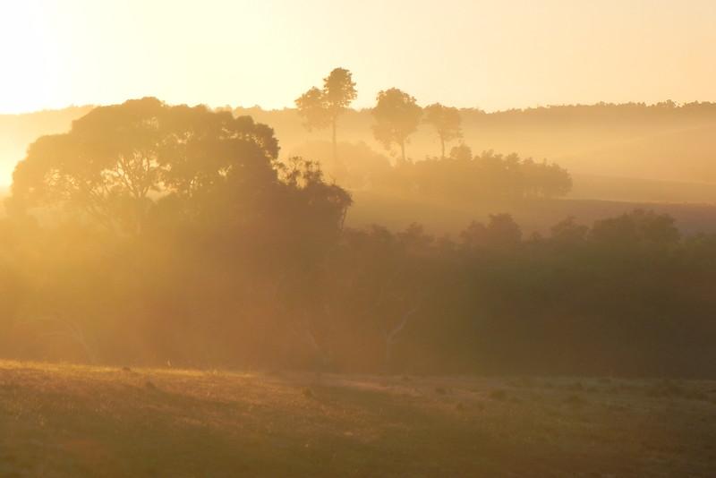 23/02/2017 - Another misty morning sunrise near Tarago