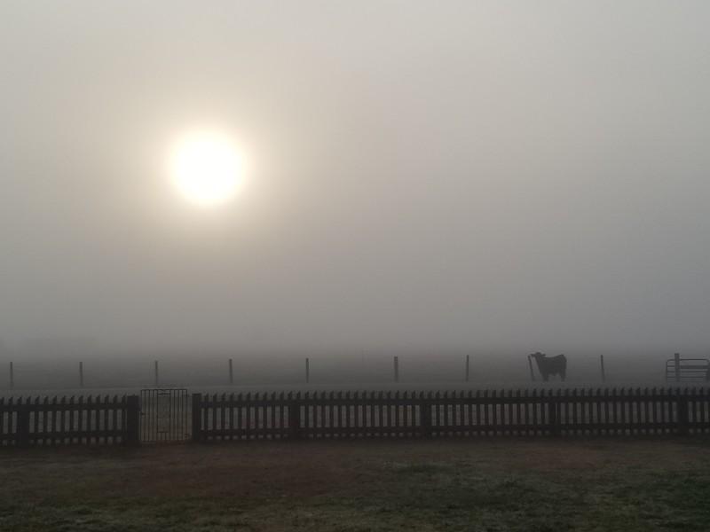 Foggy morning in Brenham