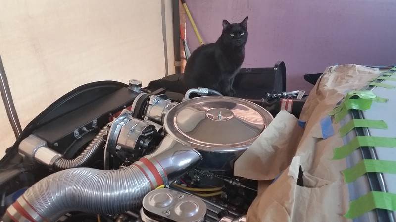I happened to mention to Sweety Girl that I had put a Stroker under the hood. Now she just sits there and looks at it.
