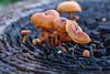 Mushrooms in the Yard