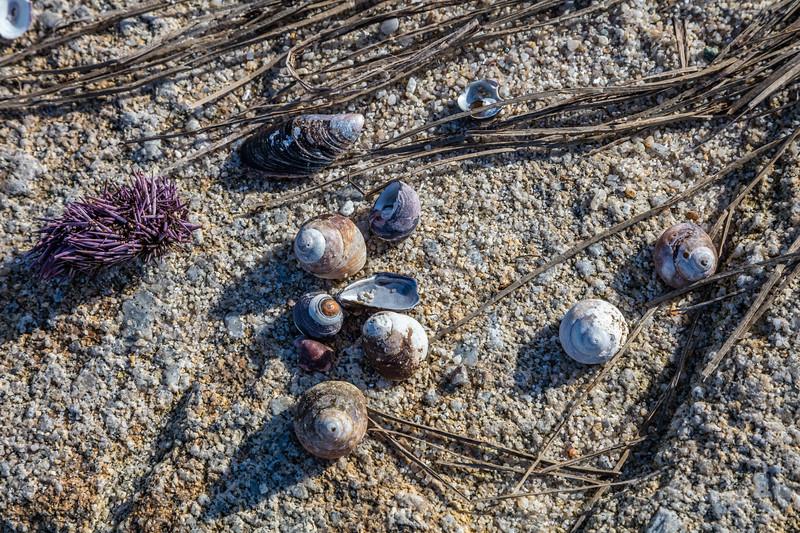 Shoreline Still Life