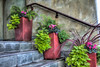 Planters on Steps